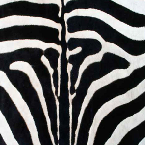 Pasterby Zebra 2